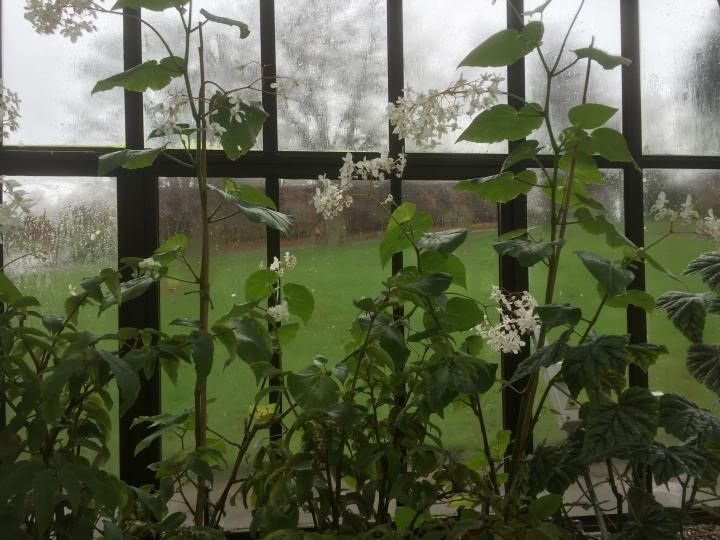 Scotland Botanic Garden Rain White Flowers
